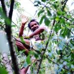 Stage Sunyoga 201308 France - Sunyogi monte dans un arbre